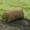 Рулонный газон. Все виды ландшафтных работ+79278-913-119 #36167
