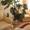 Монстера -комнатное растение #212457