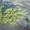 Сосны новогодние оптом дешево #984488