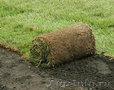 Рулонный газон. Все виды ландшафтных работ+79278-913-119